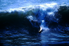 9-20-1969--Huntington Beach Calif (24) (foundslides) Tags: pictures ocean ca usa 1969 beach found photography coast photo surf kodak surfer picture surfing slidefilm 1960s kodachrome slides foundslides califronia transparencies srufers irmalouiserudd johnhrudd