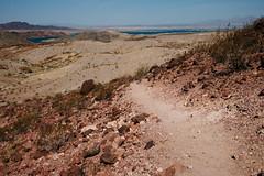 5R6K2553 (ATeshima) Tags: arizona nature havasu