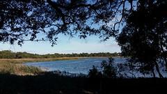 the north shore (ClareSnow) Tags: autumn lake water silhouette australia naturereserve perth eucalyptus gumtree waterlevel eucalyptusrudis floodedgum lakegwelup lakegwelupreserve