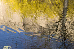 Reflection (Mary Berkhout) Tags: blue reflection water yellow outdoor denhaag serene thehague spiegeling maryberkhout