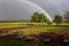 Il vient de faire 3 gouttes sur mon jardin (nez-au-vent) Tags: jardin pluie arcenciel