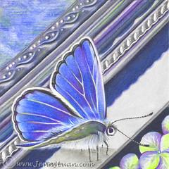 Silver Blue (Jenny Luan) Tags: flower pencil frame colored cpm coloredpencil colorpencil butterlfy silverframe cpmchallenge jennyluanart