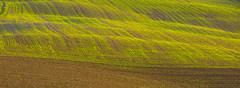 Spring Field (jfusion61) Tags: italy panorama green texture field landscape spring nikon pattern tuscany land siena minimalist 70200mm d810