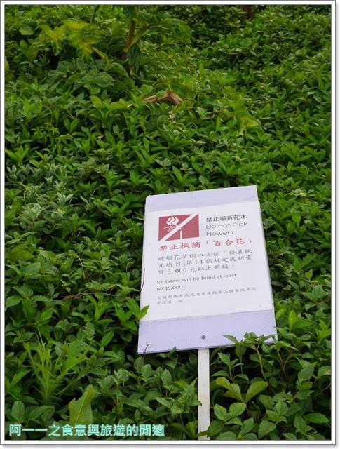 北海岸石門景點.富貴角燈塔.台灣百合.小旅行.踏青步道image033