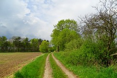 the path (JoannaRB2009) Tags: path road countryside nature spring green trees sarnw dzkie lodzkie polska poland landscape view