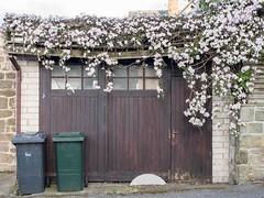 GARAGE, S YORKSHIRE_DSC_8697_LR (Roger Perriss) Tags: flowers stone doors stonework garage cottage d750 climber aston