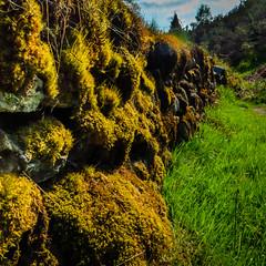 HDR mossy wall (grahamrobb888) Tags: grass wall scotland moss woods perthshire panasonic hdr photomatixpro tz60 tz60sunny
