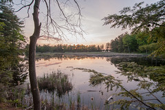 Buck Lake (RM Photog) Tags: wood trees summer lake nature water leaves spring bog