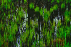Wetlands (bethrosengard) Tags: photomanipulation digitalart photoart digitallyenhanced digitalmagic bethrosengard