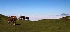 On broute en famille, (escaledith) Tags: chevaux jument poulain montagne brouillard nuages randonne pyrnes france 64
