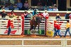 A Day at the Calgary Stampede (picadventures) Tags: alberta 2016 bucking buckinghorse horse gate cowboy rodeo stampede yyc calgarystampede calgary