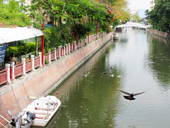 Bangkok: Pigeons Flying by the River (shaire productions) Tags: travel sea building tourism water river thailand pier fly flying photo seaside image pigeons flight picture photograph wharf