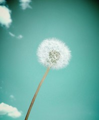 Free spirits have to soar (σℓγα ƸӜƷ) Tags: light sky flower beautiful spring blow dandelion feeling airy makeawish chillyday