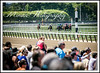 Memorial Day Crowd (EASY GOER) Tags: park horses horse ny newyork sports race canon track belmont mark iii running racing 5d athletes races thoroughbred equine thoroughbreds markiii