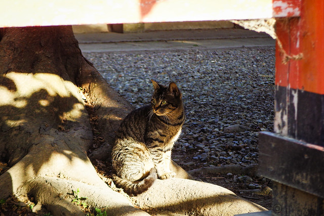Today's Cat@2015-05-11