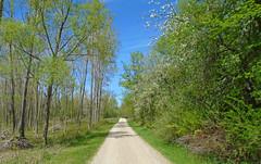 Blossoms (Larry the Biker) Tags: park flowers bikepath spring path michigan blossoms trail blooms vernal pathway railstotrails railtrail biketrail trailway oaklandtownship paintcreektrail