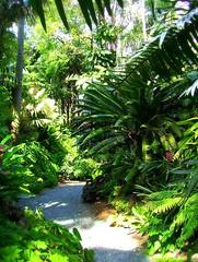 ~Oct 2009 Fairchild Gardens #9~ (endemanf) Tags: miamiflorida fairchildbotanicalgardens tropicallandscapes tropicaljunglegardens