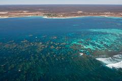 WA Coral Bay - 3105