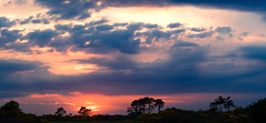 Curragh Sunset May 2016 (kckelleher11) Tags: ireland sunset may olympus panasonic omd kildare em1 curragh 2016 100300mm