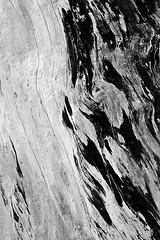 Half & Half - Akron Falls Park, Akron, NY (DTB_6206) (masinka) Tags: park wood light blackandwhite ny newyork abstract tree texture nature monochrome closeup dark outdoors photography buffalo woods pattern natural details grain interplay half transition akron abrupt