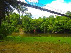 DSCN0725 (vhenryz) Tags: park trip bridge trees sky cloud nature water clouds forest river suspension reserve national mangrove jungle brunei ulu temburong