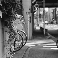 160424_ZenzaBronicaS2_003 (Matsui Hiroyuki) Tags: fujifilmneopan100acros zenzabronicas2 zenzanon150mmf35 epsongtx8203200dpi