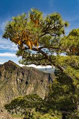 2016-04-20 La Palma April 2016 032 (m.gallenkamp) Tags: kanaren caldera lapalma canaryislands calderadetaburiente nikond610 sigma2435f2art