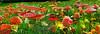 Phot.Wedel.Mushroom.Toadstools.01.1.101204.1117.jpg (frankartculinary) Tags: sunset mushroom port marina germany nikon tramonto sonnenuntergang harbour hamburg porto coolpix funghi f2 f3 d200 hafen wedel f4 marshland hongo champignon barnaclegoose marsch holm pilz d800 puestadelsol coucherdusoleil d300 willkommhöft ropemaker haseldorfermarsch nonnengans elbwanderweg weisswangengans datolelandii frankartculinaryyahoode forschungsschiffsonneii researchsurveyvesselsonneii reepschlägerhause