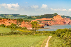 Red Devon cliffs (Keith in Exeter) Tags: uk red sea england cliff tree green field grass rock point landscape bay coast high europe path cereal peak stack devon hedge crop gb otterton ladram chiselbury smallstones