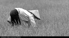 x-default (quetoi17) Tags: vietnamese vietnam hoian hanoi dalat saigon mekong halong sapa cantho hochiminh phuquoc hatay quangngai nhatrang haiphong phanthiet sonla binhduong hagiang yenbai thanhhoa thaibinh tiengiang thainguyen baccan dongvan mocchau lungcu hungyen fanxiphang mucangchai meovat