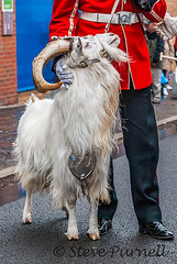 Royal Welsh fusiliers In Bargoed (Steve Purnell Photography) Tags: army freedom march band goat rifles parade celebration soldiers guns marchingband firearms batallion rwf royalwelshfusiliers bayonets