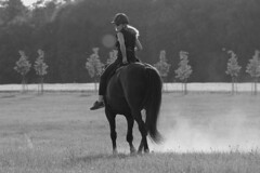 Caro und Winnie (feldweg) Tags: horse caballo cheval riding rider cavallo pferd horseback reiten hest kon reiterin