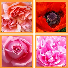 Nur Jesum wissen (amras_de) Tags: flower fleur flor blomma blume fiore blte blomst virg lore bloem blm iek floro kwiat flos ciuri kvet kukka cvijet flouer blth cvet zieds is floare blome iedas