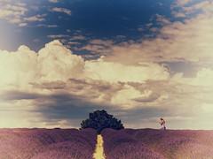 Float on lavander (Enrico Cusinatti) Tags: travel vacation sky france clouds nuvole nuvola cielo fiori minimalismo fiore albero viaggi vacanze nubi vegetazione canoneos6d vallensole enricocusinatti