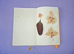 Existncia nua e crua (Beabiabolhas) Tags: old flowers flores orchid art moleskine nature writing vintage notebook colorful diary dirio dryflowers orqudea floressecas