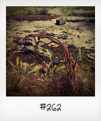 """#DailyPolaroid of 16-6-16 #262 • <a style=""""font-size:0.8em;"""" href=""""http://www.flickr.com/photos/47939785@N05/28885537016/"""" target=""""_blank"""">View on Flickr</a>"""