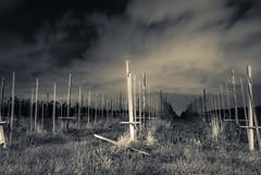 2016_08_10(06) (bas.handels) Tags: slowshutter longexposure clouds sky night nacht wolken lucht heerlen simpelveld nature matuur outdoor sluitertijd splittone split tone splittoning