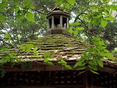 Gazebo mossy roof (pilechko) Tags: bowmanshill newhope buckscounty pennsylvania green roof moss leaves gazebo
