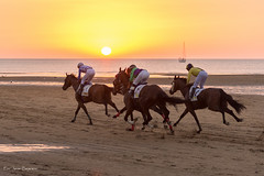 Carreras de caballos en Sanlucar (Javibeje) Tags: andaluca carrerasdecaballos cdiz ocaso playa sanlucardebarrameda deporte javier bejarano nikon nikonistas d7200