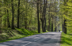 Country road in Spring (frankmh) Tags: trees countryside skne spring sweden roads scania