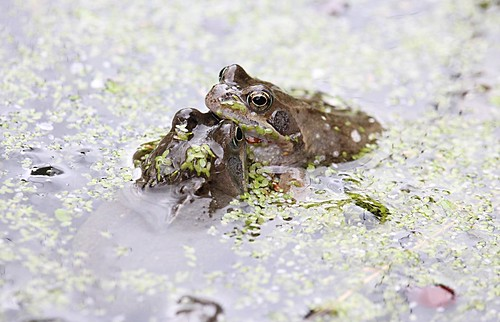 Frogs in Sensory Garden