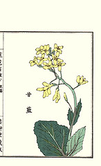 Kale (Japanese Flower and Bird Art) Tags: flower art japan japanese book picture kale woodblock nihonga brassica brassicaceae kono oleracea readercollection bairei