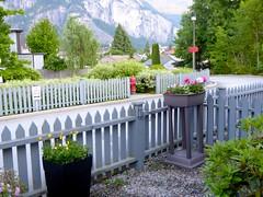New Today (I Flickr 4 JOY) Tags: flowers plants garden basin monstrosity outofplace stilts stratacouncil livingbytherules