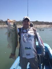 Lobina Bass Reporte Pesca11