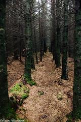 Spooky Woods (AdamMatheson) Tags: trees tree pine landscape scotland woods scenery scottish scene row spooky motorola plantation helensburgh rhu scottishlandscape argyllbute smugglersway motog helensburghscotland adammatheson helensburghphotographer helensburghphotography adammathesonphotography motorolamotog rhuscotland aldownickglen smugglersglen rhuwaterworks rowwaterworks rhureservoir rowreservoir