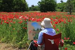 Poppies and a Painter (seiji2012) Tags: painter poppy showakinenpark   anapola
