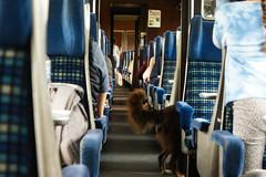 tom 69 (pamelaadam) Tags: autumn dog animal digital work scotland fotolog september highland aviemore youthwork 2015 churchofscotland thebiggestgroup ellonparishchurch