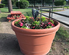 Flower Pot Larger than a Picnic Table (hbickel) Tags: park flowers pad photoaday flowerpot picnictables cookpark apple6s apple6splus