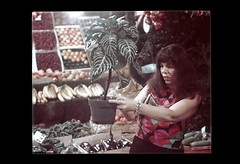ss23-31 (ndpa / s. lundeen, archivist) Tags: people woman plant color film vegetables boston fruit shopping massachusetts nick slide maggie banana pottedplant produce slideshow brunette mass 1970s bostonians shopper bostonian dewolf early1970s nickdewolf photographbynickdewolf slideshow23