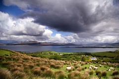 Bantry Bay, Ireland (saeah_lee) Tags: ireland sky weather clouds landscape europe sheep bantrybay bantry